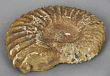 An ammonite fossil specimen Of typical form.  38