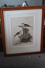 Print - Hedge Sparrow