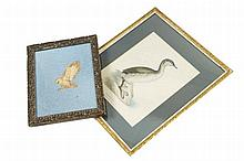 Nineteenth century ornithological print