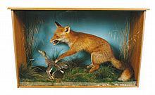 Stuffed fox in case 114 wide 69 cm. high