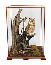 Stuffed owl in case 60 cm. high