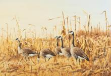 JAMES KILLEN (American, b. 1934). CANADIAN GEESE, signed lower left. Watercolor.