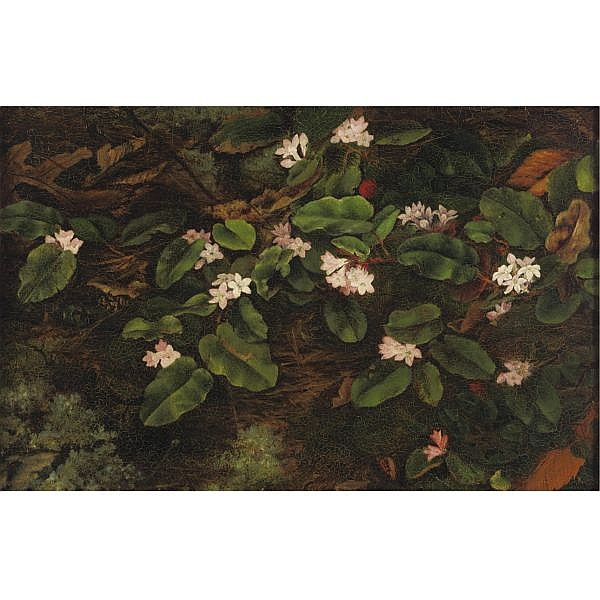 Fidelia Bridges 1835-1924 , Branches oil on board
