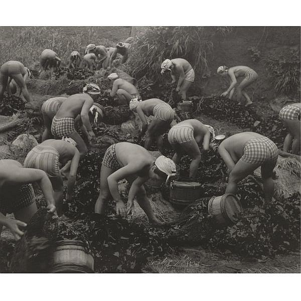 Yoshiyuki Iwase , 1904-2001 seaweed harvest