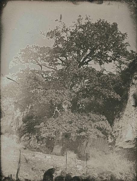 Joseph-Philibert Girault de Prangey (1804-1892) , Étude de chêne, vers 1841