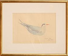 20th Century School: Common Tern
