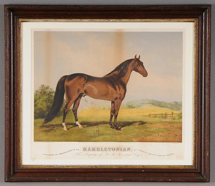 COLORED PRINT OF THE RACE HORSE,