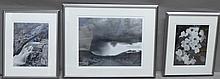 Three Framed Black & White Nature Photographs