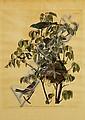 John J. Audubon,