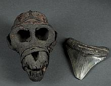 Old Monkey Head Skull and Sharks Tooth