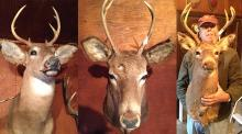 3 Deer Mounts