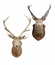 TWO STAG'S HEAD TROPHY MOUNTS