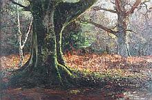 § HUGH WILKINSON (1849-1948) WOODED LANDSCAPE 30cm x 46cm (12in x 18in)