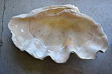 Large Clamshell. Approx 75cm W x 50cm D