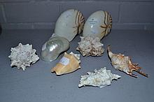 Assortment of seashells (8)