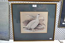 Antique English School, watercolour of a bird,