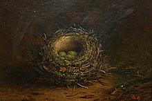 Tom Hold (19th Century), Still life of a bird's nest with eggs, signed lower left, inscribed verso Hedge Sparrow, oil on canvas, framed. 24cm by 29cm