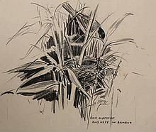 Eileen Alice Soper (1905-1990), Four pencil sketches for her book, Wild Encounters, comprising Cock Blackcap and nest in bamboo, Moonlit snow, Hedgehog family and Swallows bath; each with Chris Beetles label; together with a copy of the book, pub.