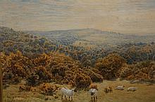 John Clayton Adams (1840-1906), Sheep on a bankside, signed lower left, watercolour, framed. 24cm by 34cm
