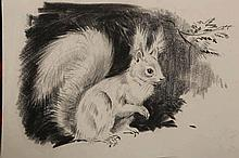 Eileen Alice Soper (1905-1990), Red squirrel, seated; Water vole; Muntjac and pheasant, Blackcap on bough, in song; Hare, seated; five pencil sketches, each with Chris Beetles management stamp for The Estate of George & Eillen Soper, unframed. Each