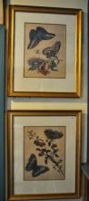 After P Sluyter, Butterflies, prints, published by the Zoological Society of London, in gilt frames, 34 x 26cm