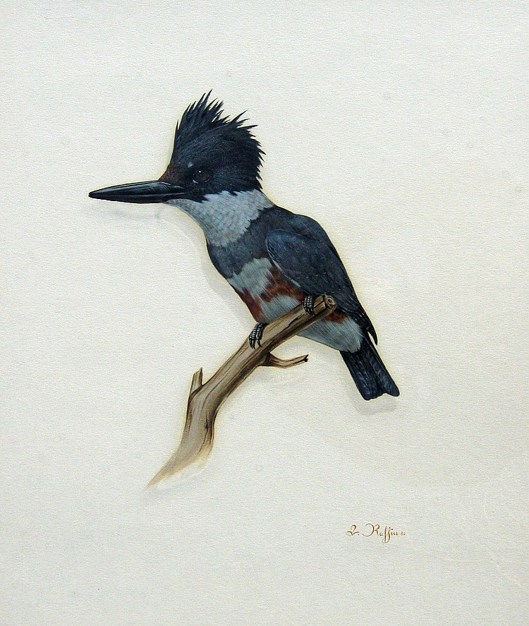 Luke Raffin Kingfisher