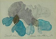 Anna Hawthorne Sweet Peas