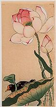 OHARA KOSON - 小原古邨 (1877 - 1945)