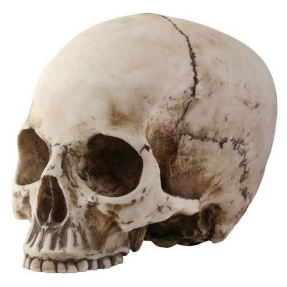 SKULL HEAD #1AC62275