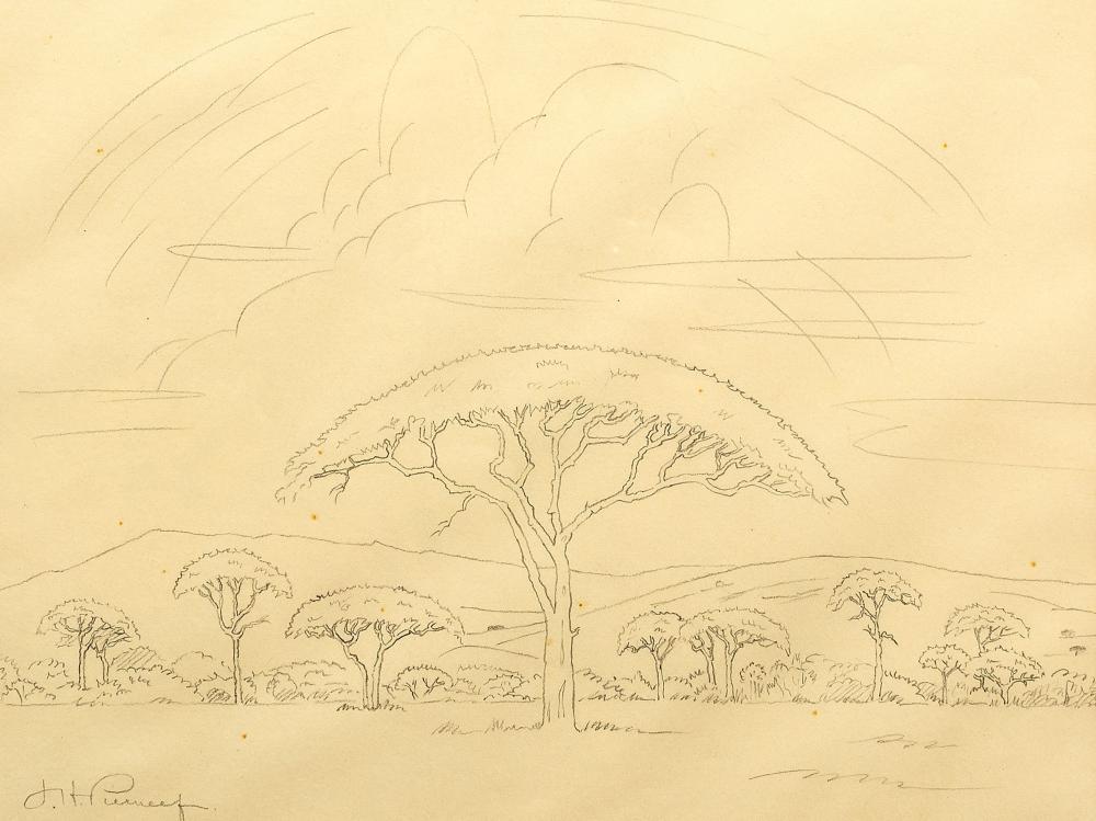 J.H. Pierneef (SA 1886 - 1957) Pencil, Acacia Trees, Signed, 26 x 31