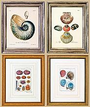 TEN ENGRAVINGS OF SHELLFISH, AND FOUR OTHERS