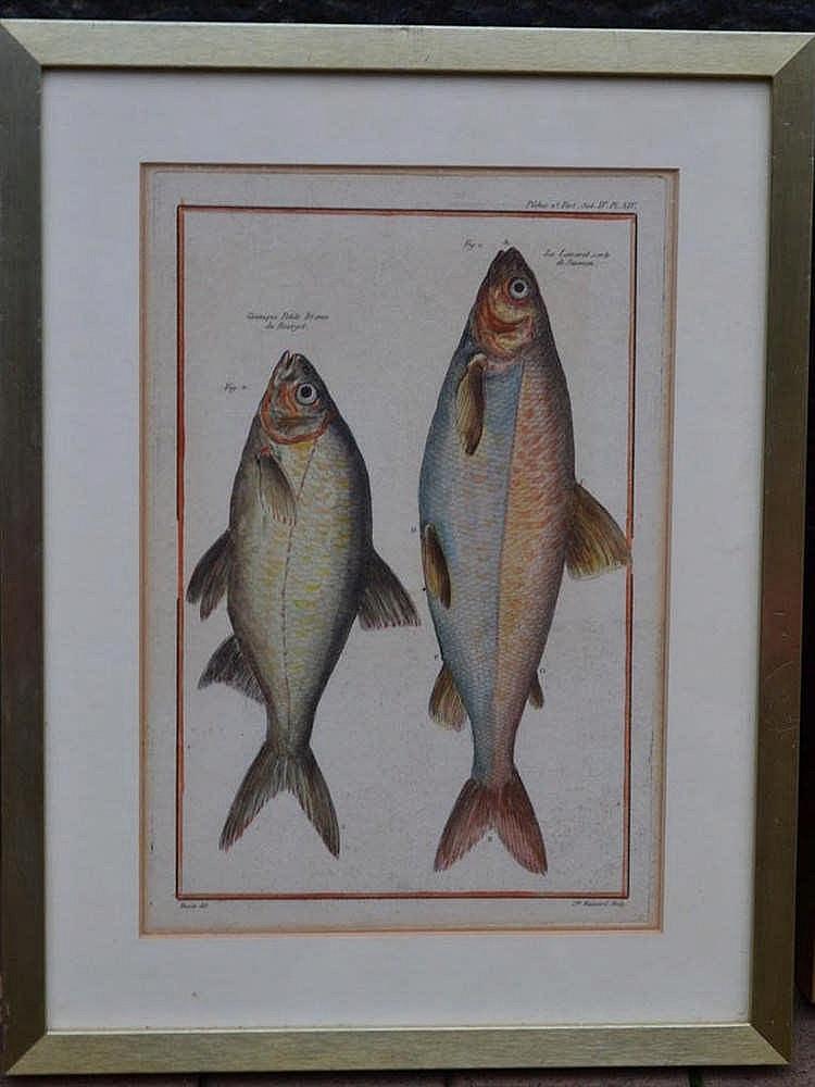 Litho's vissen