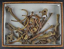 (Natural History) Human bones