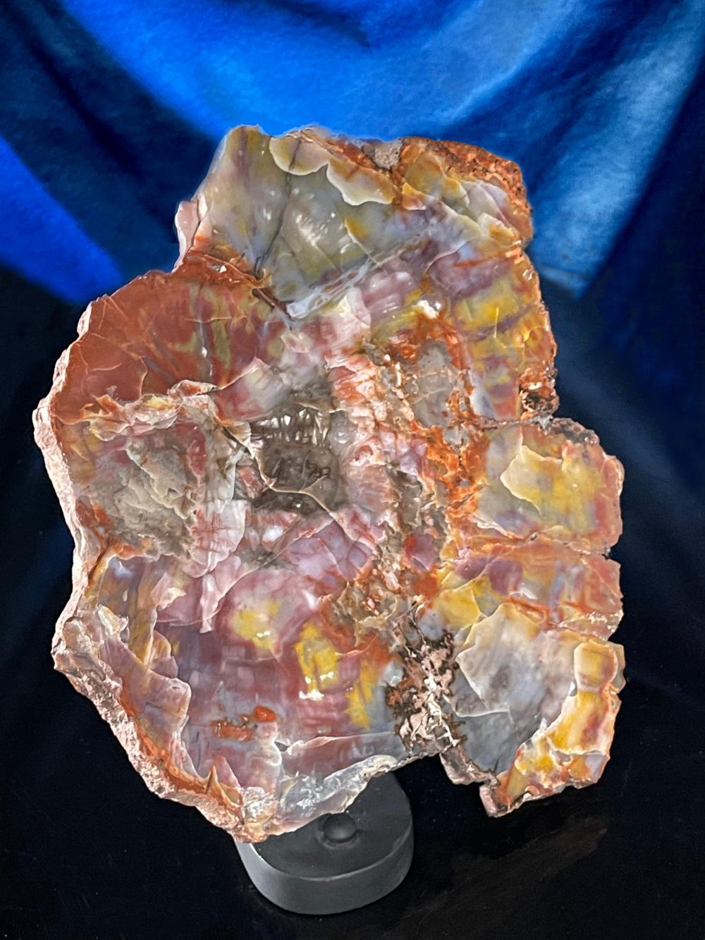 Arizona Rainbow Petrified Wood Fossil Quartz