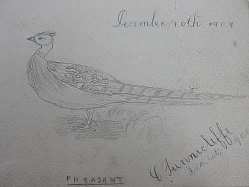 Charles Tunnicliffe; early pencil sketch