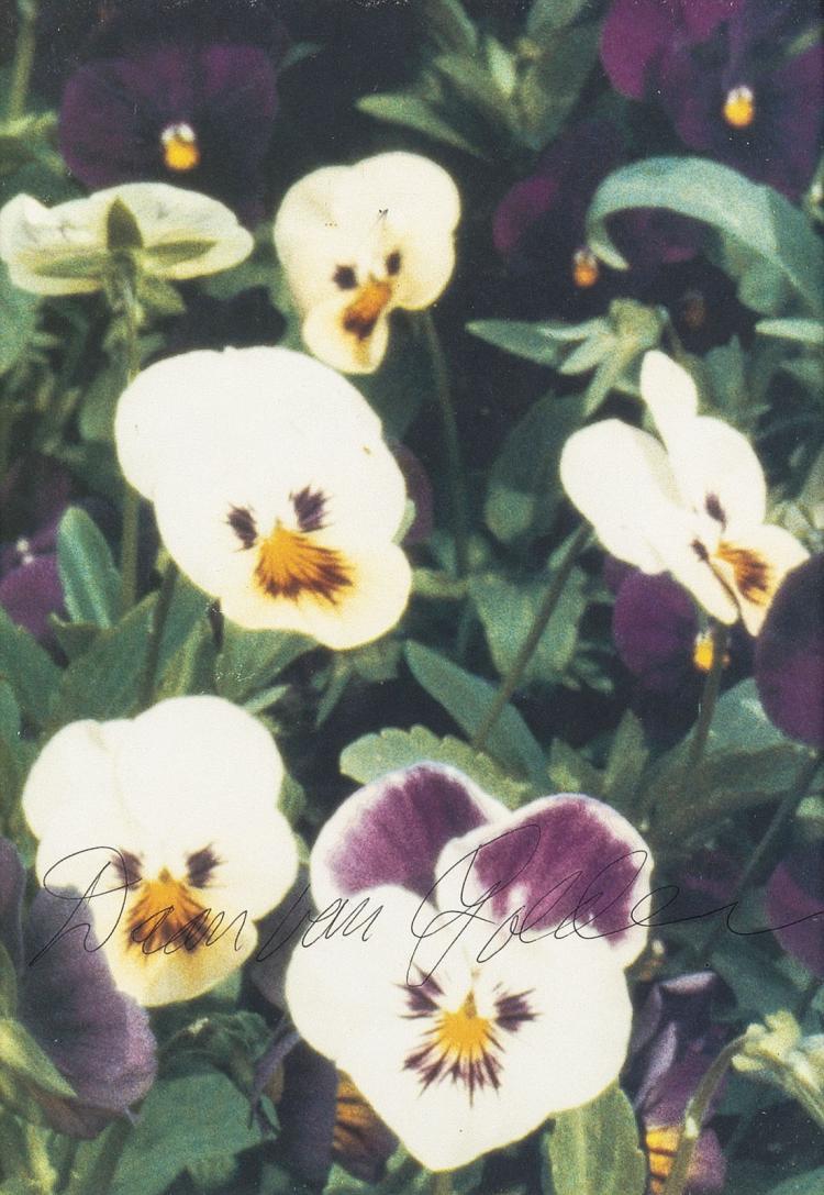 Violets from Venice, signed Daan van Golden