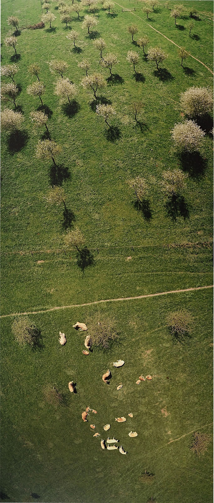 The green pastures seen from a kite by Gerco de Ruijter