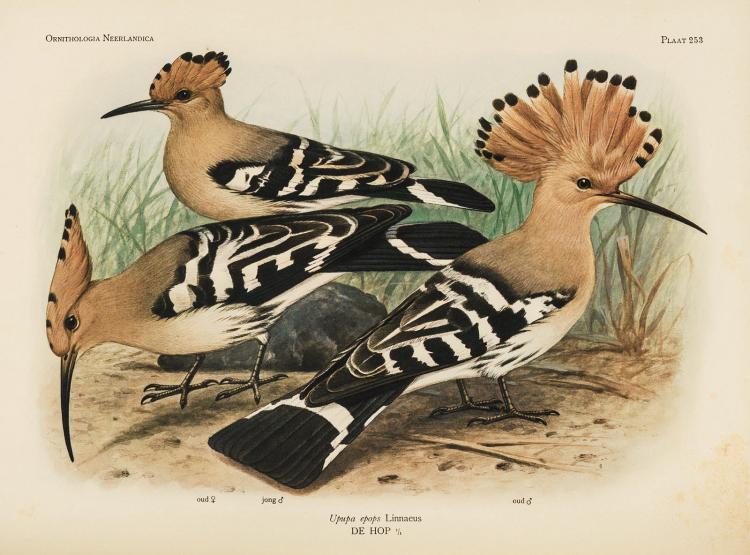 Very fine copy of Van Oort's monumental work on Dutch birds