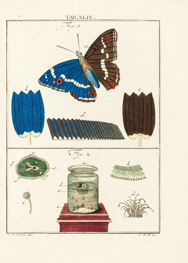 With 150 hand-coloured engravings after microscopical observations