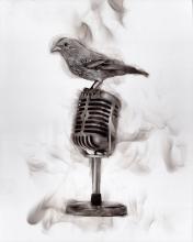 Bird on Mic