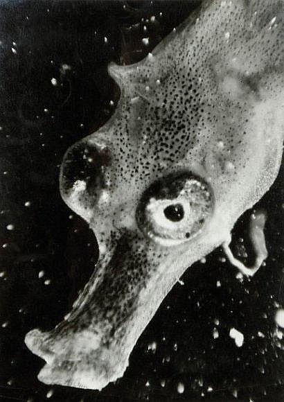 Photographs: Jean Painlevé (1902-1989)