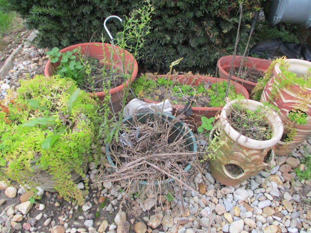 LOT OF FLOWER POTS CERAMIC AND OLASTIC