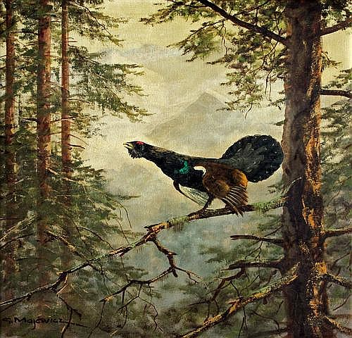 Majewicz George: Wood grouse