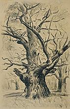 Wyczółkowski Leon - OLD OAK, 1929, crayon, paper
