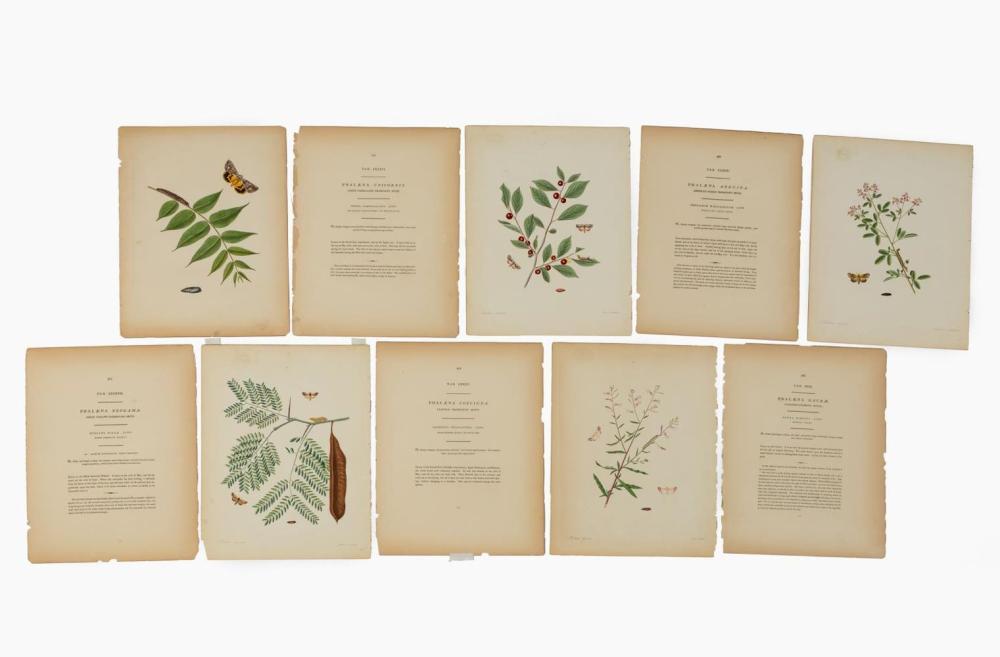 5 PCS, JOHN ABBOT BUTTERFLIES OF GEORGIA 1797