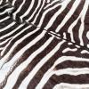 Vintage Taxidermy Zebra Rug