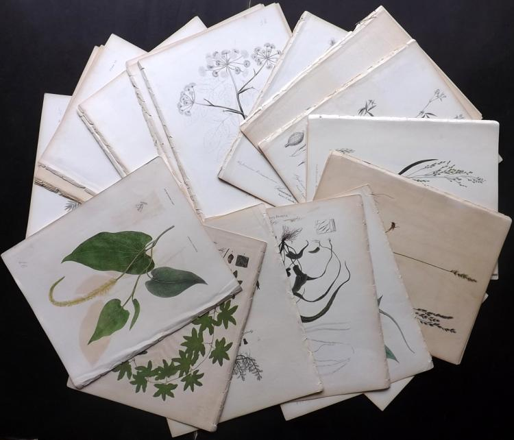 Torrey, John 1843 Lot of 54 New York Botanical Prints