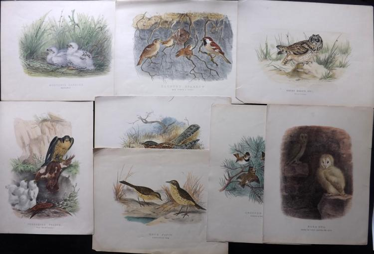 Booth, Edward Thomas 1880's Lot of 8 Large, Rare Hand Coloured Bird Prints