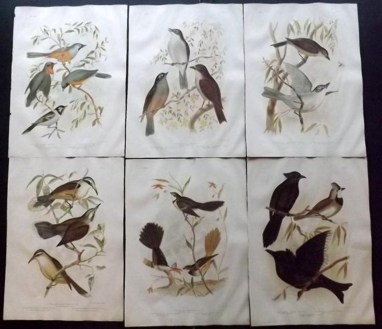 Broinowski, Gracius Joseph 1891 Group of 6 Australian Bird Prints