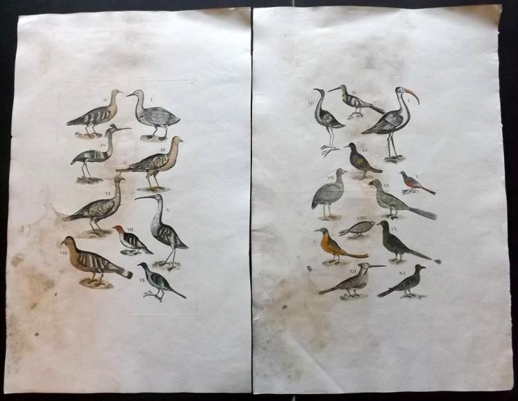Jonston, John 1772 Group of 3 Large Hand Coloured Bird Prints